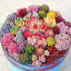 Cheap pot flower seeds, Buy Quality succulent seeds directly from China bonsai seeds Suppliers: Rare Beauty Succulents Seeds Easy To Grow Potted Flower Seeds Bonsai Seeds for Home & Garden mix color Succulent Hanging Planter, Vertical Succulent Gardens, Succulent Gardening, Succulent Terrarium, Organic Gardening, Gardening Blogs, Kitchen Gardening, Colorful Succulents, Cacti And Succulents