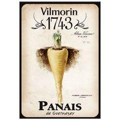 Vilmorin 1743 - Panais