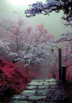 Ideas Spring Nature Photography Trees Scenery For 2019 Beautiful World, Beautiful Images, Pretty Images, Landscape Photography, Nature Photography, Belle Photo, Pretty Pictures, Funny Pictures, Beautiful Landscapes