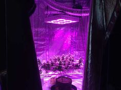 LED grow lights usually need to be or more above your plants in order to prevent bleaching and light burn Grow Lights For Plants, Led Grow Lights, Weed Art, Light Take, Types Of Lighting, Outdoor Settings, Light Decorations, Night Light, Bulb