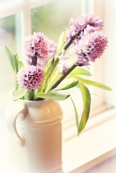 hyacinth in the window - By lucia and mapp