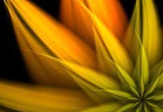 Fractal Art: How to Create Basic Fractal Flowers in Apophysis