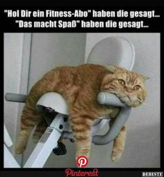 Gyms Equipment How To Use - Gyms Videos Ideas - - Gyms Life Humor - Gyms Clothes Black Funny Animal Pictures, Funny Photos, Cool Pictures, Animals And Pets, Funny Animals, Cute Animals, I Love Cats, Cute Cats, Image Facebook