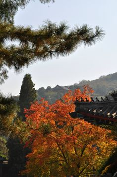 Fragrant Park in the fall in Beijing, China.