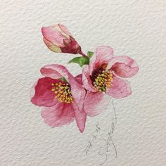 1878 Likes 12 Comments Today is a gift! Watercolor Cards, Watercolor Flowers, Watercolor Paintings, Watercolours, Cherry Blossom Watercolor, Drawing Flowers, Art Floral, Spring Drawing, Illustration Botanique