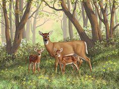 Fawn Tattoo, Baby Deer Tattoo, Wildlife Paintings, Wildlife Art, Deer Paintings, Watercolour Paintings, Watercolours, Landscape Paintings, Deer Drawing