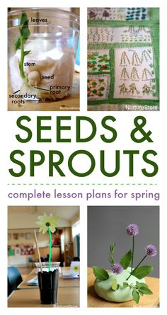 seed growing lesson plans, spring nature study activities nature Seed growing lesson plans for spring nature study - NurtureStore