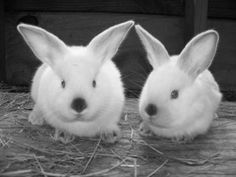 Raising Rabbits for Self-Sufficiency - simple article about the very basics of raising rabbits.