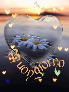 Buondì 🌸 Italian Memes, Good Morning Images, Christmas Bulbs, Wallpaper, Holiday Decor, Italy, Smiley, Video, Emoji