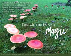After a few days of rain, a village of magical mushrooms popped up in the yard. Graphic Quotes, Roald Dahl, 30 Day Challenge, Online Art, Best Quotes, Stuffed Mushrooms, Feelings, World, Plants