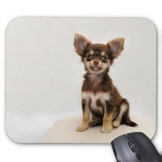 Dogs Mouse Pad - dog puppy dogs doggy pup hound love pet best friend