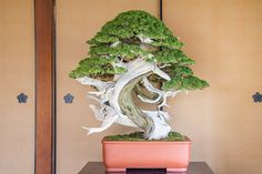 Genko Kai exhibit at Hoshu-in | Bonsai Tonight