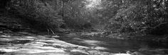 rpantaleo posted a photo:  Looking upstream at Swallow Falls State Park.  Fuji G617  Ilford PanF Plus 50  www.monvalleyphotoworks.com