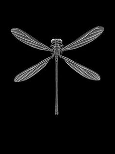 Natural Revelation -  dragonfly can symbolize maneuverability and super sight