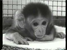 There is more to learn from Harlow's research videos than just the notion that love is a necessary element of child-rearing. Animals suffer greatly during medical/science experiments, just as a human child would...So how can we justify the kind of torture that we currently condone on college campuses and in research facilities? http://youtu.be/_O60TYAIgC4