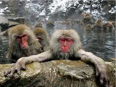 Hakuba Snow Monkeys - Jamming in the Onsens!