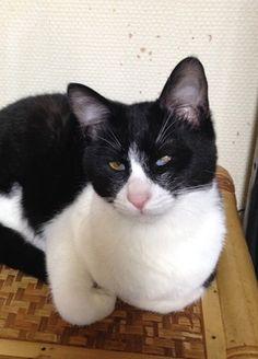 里親さんブログ14日里親会参加予定猫 その1 - http://iyaiya.jp/cat/archives/71117