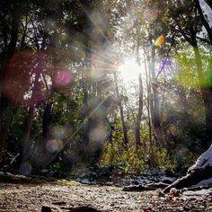【fifthdegreeusa】さんのInstagramをピンしています。 《@Regrann from @maaaaage -  木漏れ日✨ 久しぶりに家の前の公園?森?を散歩。レンズのせいで変わった写真が撮れたけどこれも神秘的ってことで…。 * Sun rays in the forest☀️Had a short refreshing walk through the woods in front of my house. * Diese  Sonnenstrahlen zwischen den Bäumen hat mir ein geheimnisvolles Eindruck gegeben✨ * #forest #woods #trees #nature #naturelovers #landscape #wanderlust #sun #sunrays #light #shadow #igersjp #team_jp_ #igworldclub #camera #nikon #photography #instadaily #reflection #自然 #風景…