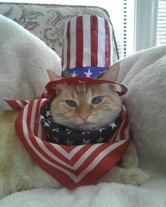 These Super Cute Animals Are All Dressed up And Ready to Celebrate of July - World's largest collection of cat memes and other animals Cute Cats And Kittens, Cool Cats, Kittens Cutest, Kitty Cats, Fourth Of July Pics, July 4th, Cat Celebrating, Super Cute Animals, Cat Hat
