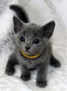 9 Adorable Kittens Every Cat Lover Must See, Click On This Pic To See Them All - Click for More...