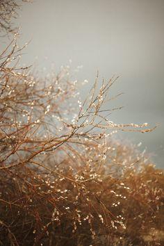 Goodbye winter by Loreta