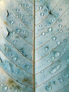 Art in Nature - leaf veins & rain drops: beautiful duck egg blue tones + natural texture and pattern inspiration Foto Macro, Bleu Pale, Fotografia Macro, Belle Photo, My Favorite Color, Textures Patterns, Leaf Patterns, Shades Of Blue, Color Inspiration
