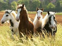 """""""Y mientras cabalgaba, mi corazón resonaba en los pasos sobre el prado húmedo; resonaba en el resoplar y el tascar del freno de mi caballo tordo, y una dicha inefable iluminó mi corazón, y supe que si dejaba ahora este mundo, caería en el paraíso"""" BARON DE MÜNCHAUSEN"""