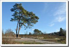 rust landschap (1)