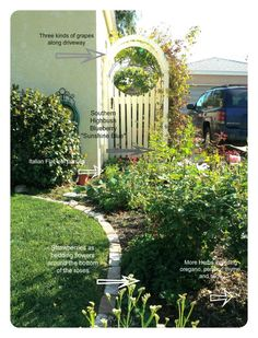 Edible Landscaping. Def for the next house.  Maybe here too, since I have to start over in my front garden anyway.  Add some asparagus to the list and we would be set!