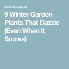 9 Winter Garden Plants That Dazzle (Even When It Snows)