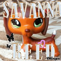 Savvy isn't my favorite character on lps popular, but she is a pretty and cute one! Lps Popular, Dashund, Lps Pets, Lps Littlest Pet Shop, Little Pet Shop, Sassy Girl, Pretty And Cute, Savannah Chat, Yummy Food