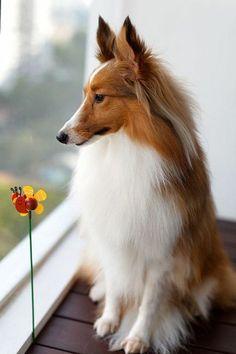 comment choisir un chien, race de chien taille moyen