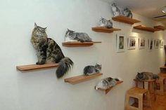 prateleiras para gatos