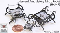 Researchers at the Harvard Microrobotics Lab have created insect-sized robots that can run and operate on their own power source.