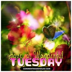 tuesday-have-wonderful-day-butterfly - Commentwarehouse.com
