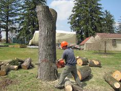 Top Rated Tree Lopping Services in Sydney Services