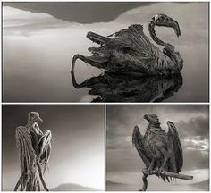 Lake Natron in northern Tanzania turns animals into statues. The lake can reach a temperature of up to 50 degrees Celsius and its alkalinity levels vary between pH 9 - 10.5. Only some extremophiles, like the alkaline tilapia, live there. All other creatures that mistakenly 'crash' into the most caustic lake on Earth, are turned into calcified versions of themselves. Photographer Nick Brandt visited the place and took this eerie images of birds turned into statues after 'crashing' into the…