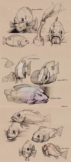 Summer 2011 Sketches 6 - aquatic animal — Minimally Minimal