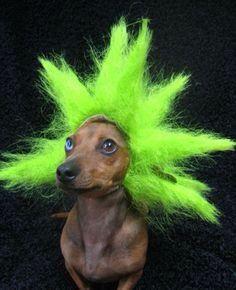 Look its a wiener troll...