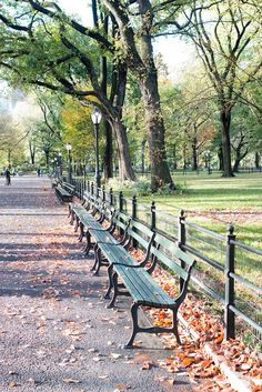 Central Park in the Fall | Autumn in New York City