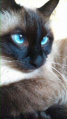 Blue eyes beauty.