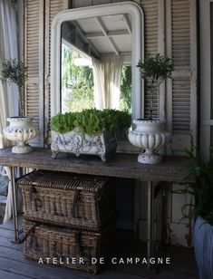 Topiaries in White French Urns