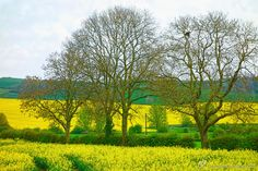England's Green and Pleasant Land - 6 by Steve Hey on 500px