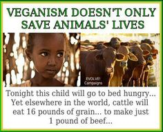Fact and a reason why the whole, the world needs meat to feed the starving argument is a load of bull crap.