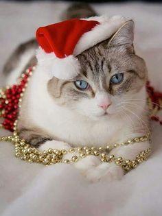 Kalėdų elfas