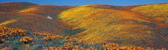 Antelope Valley California Poppy Reserve, California, USA ~ My Travel Manual