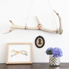 How to Clean & Display Antlers