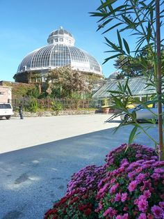 カナダ・トロントの「アラン温室庭園」にて。Allan Gardens Conservatory  in Toronto, Canada.