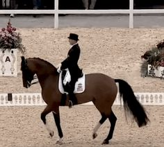 dressage gif - Google Search