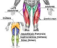 anatomia_pernas